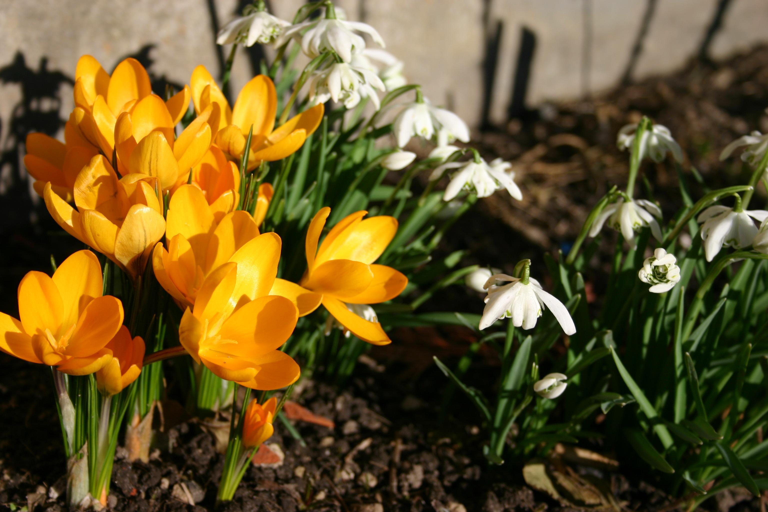 foråret kommer
