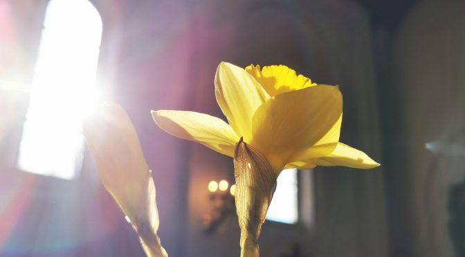 Påskehilsener og påskegudstjenester fra Slagelse Provsti